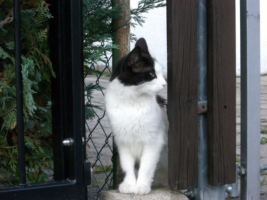 Schöne Katzenbilder