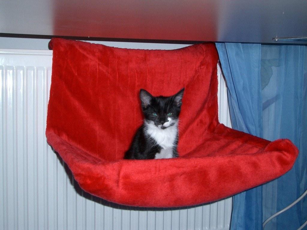 Heizungshängematte für Katzen