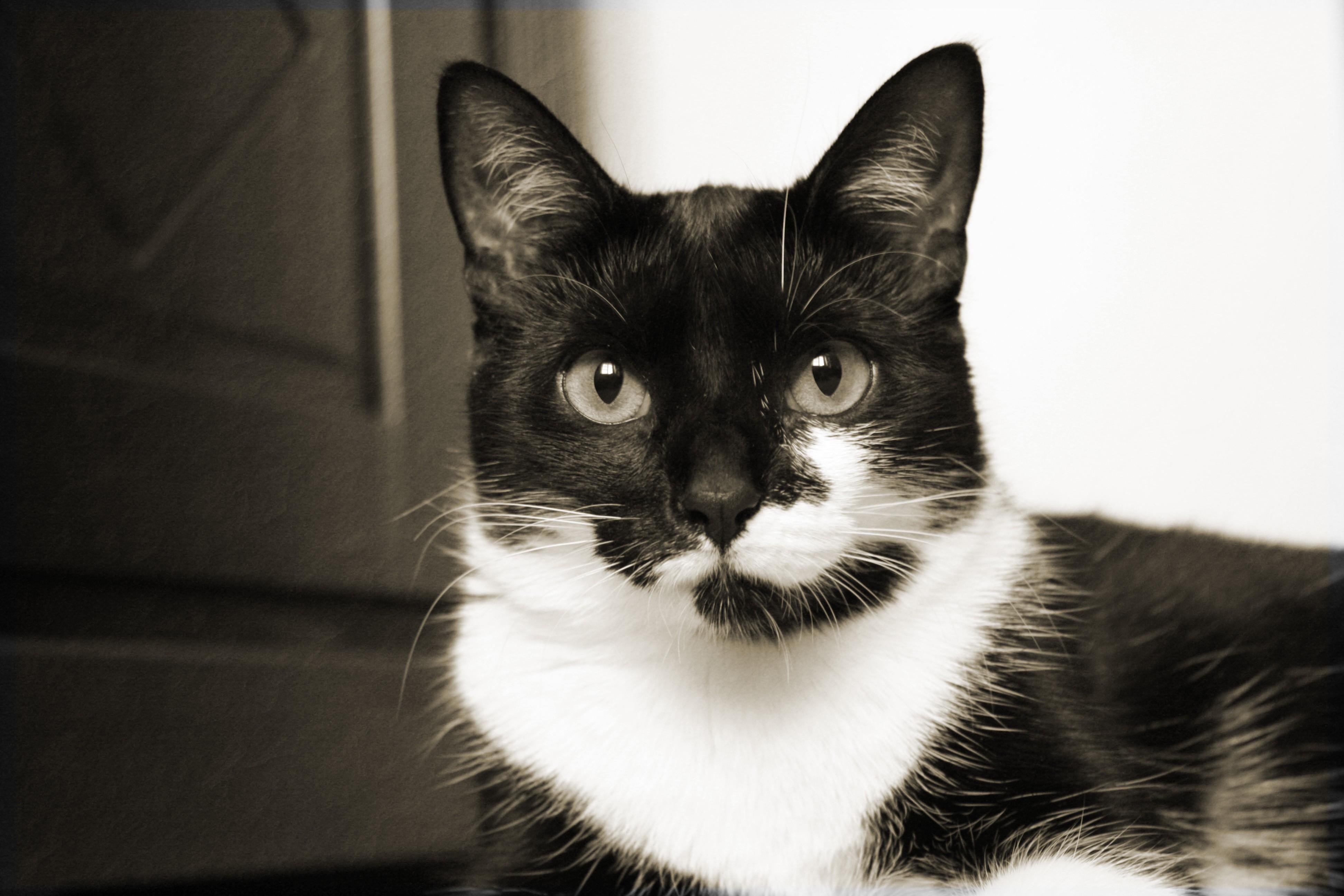 Meine Katze Amy