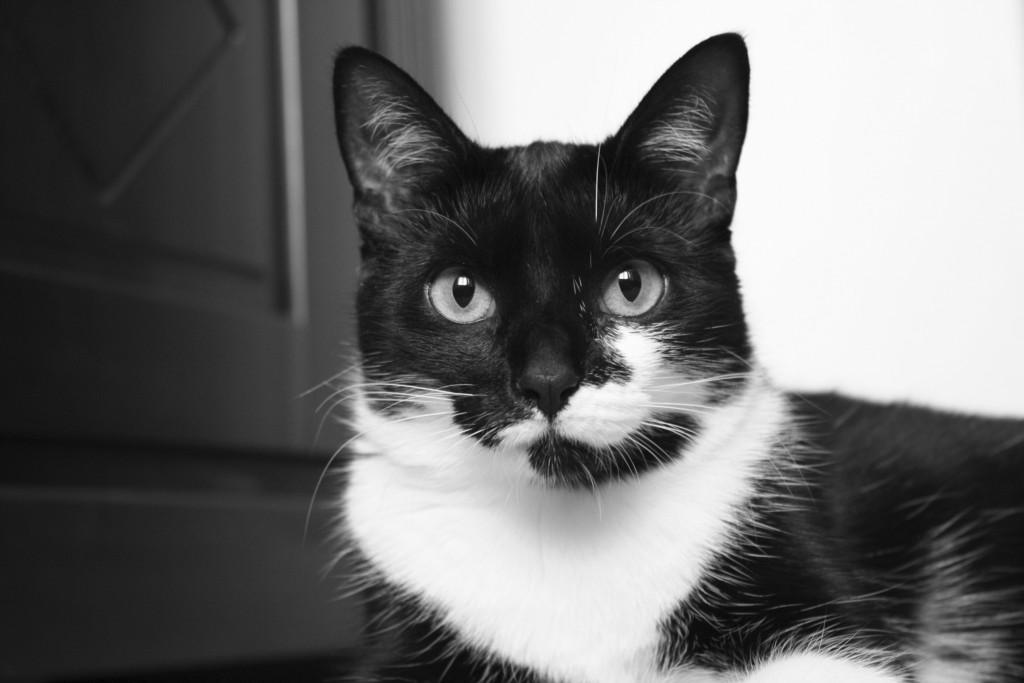 Meine Katzen: Katzen Amy