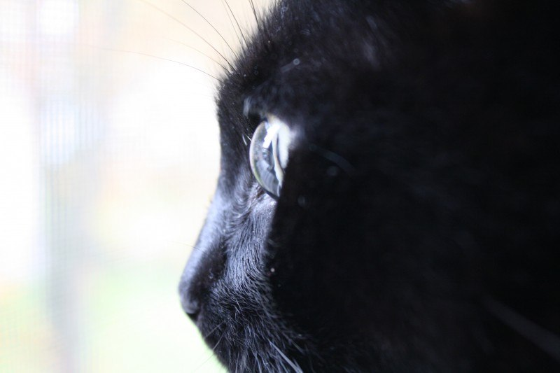 Ausbildung Katzenpsychologe