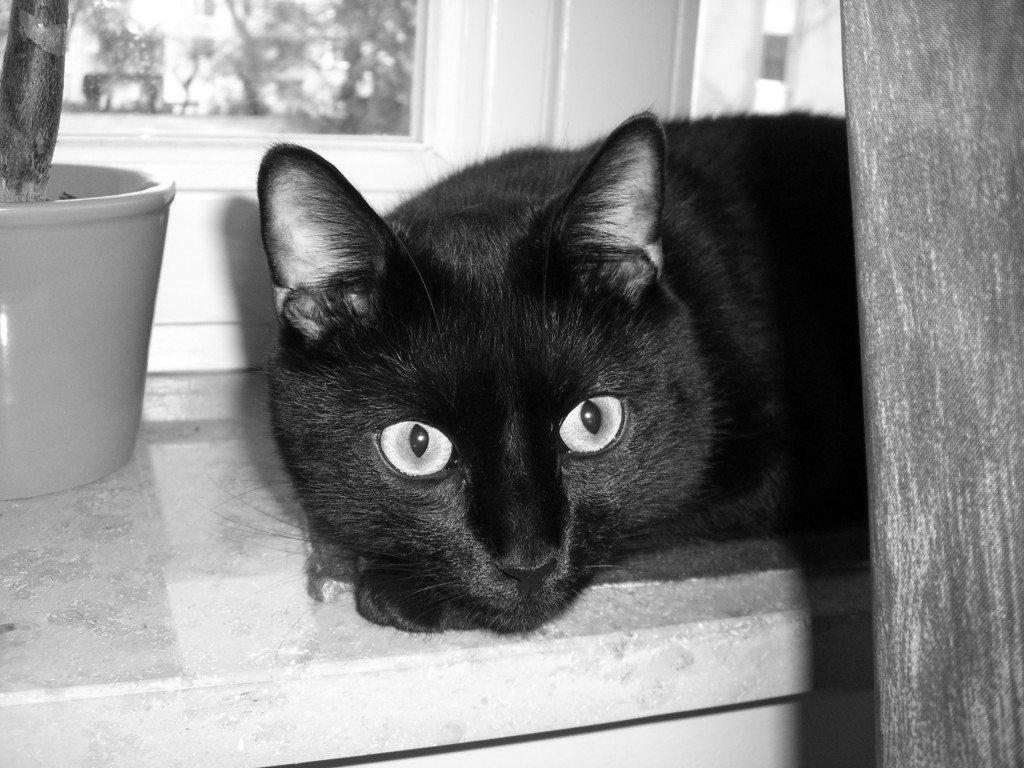 Meine Katzen: Kater Filou