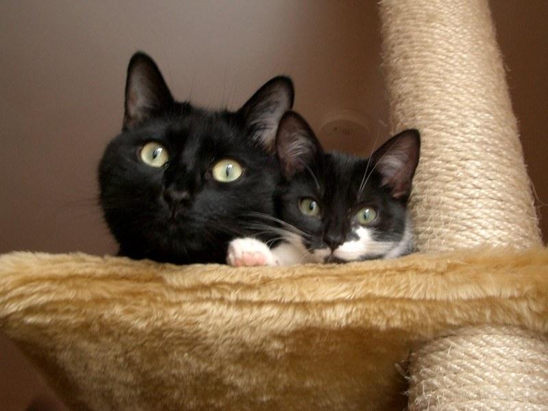Katzenhaltungsberatung