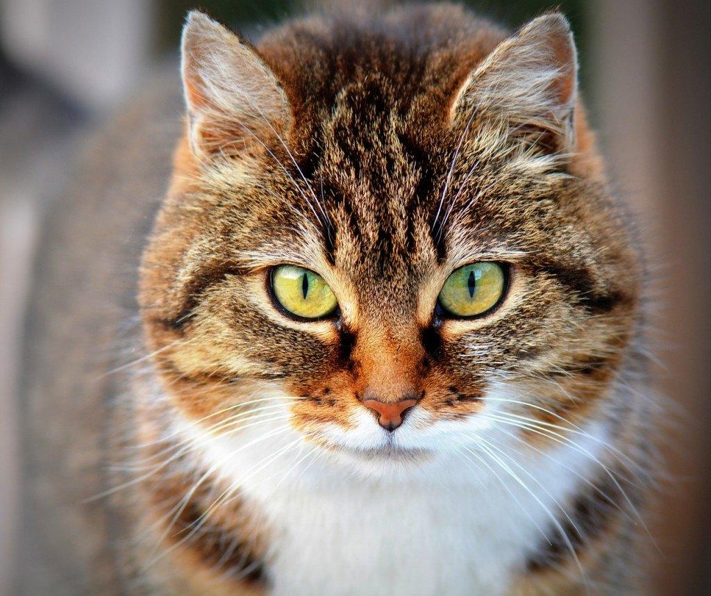 Katzenernährungsberatung