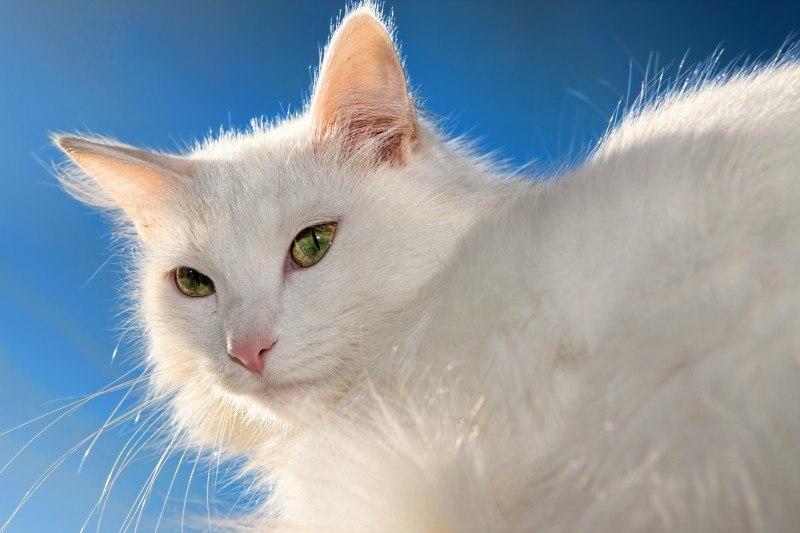 Katzen-Links