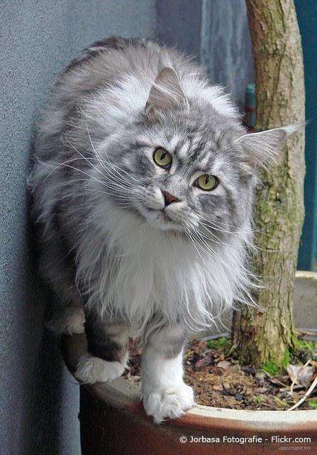 (diekatzenexpertin.de) Foto 2
