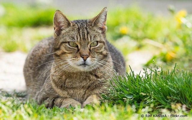 (diekatzenexpertin.de) Foto 3