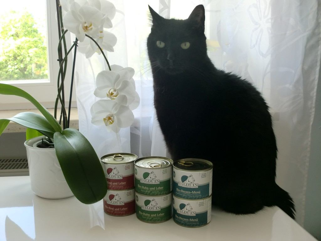 Produkttester Filou mit BALDUIN Bio-Katzenfutter