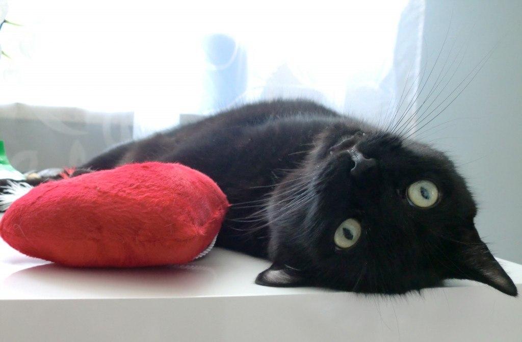 Filou auf Catnip