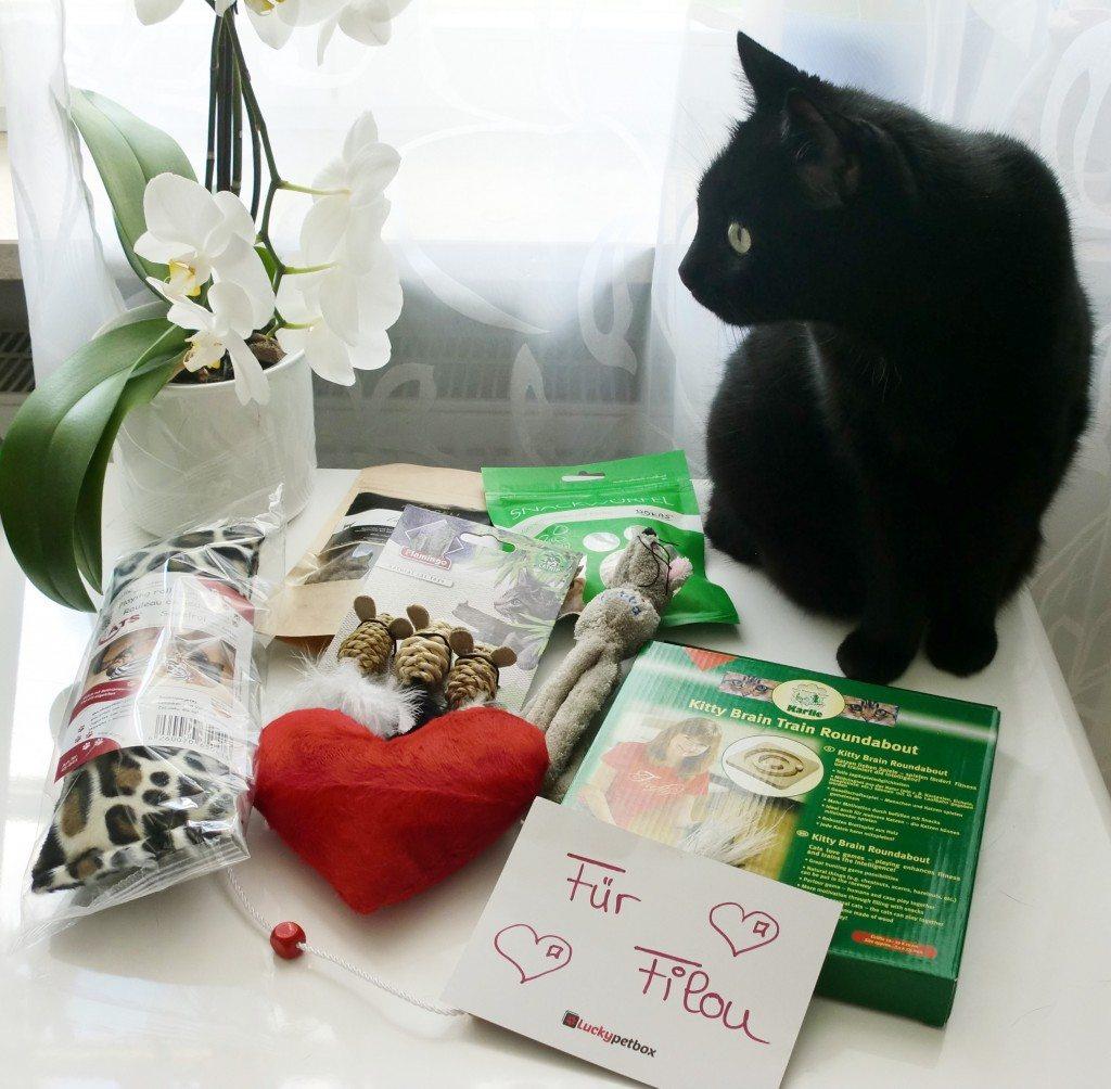 Filou mit dem Inhalt seiner Luckypetbox