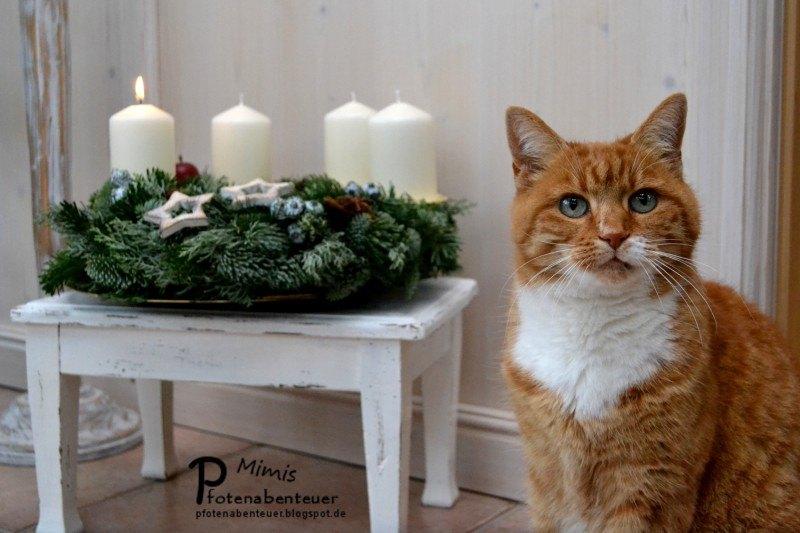 adventskalender und geschenke f r katzen und katzenbesitzer. Black Bedroom Furniture Sets. Home Design Ideas