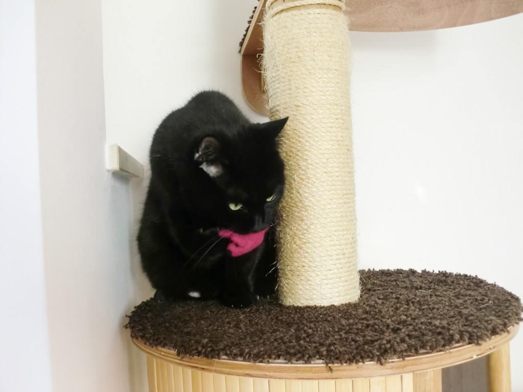 Spielmaus für Katzen aus Filz