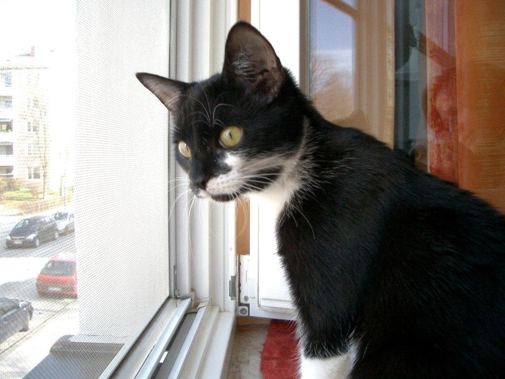 Katzen verstehen - das Leben aus Katzensicht
