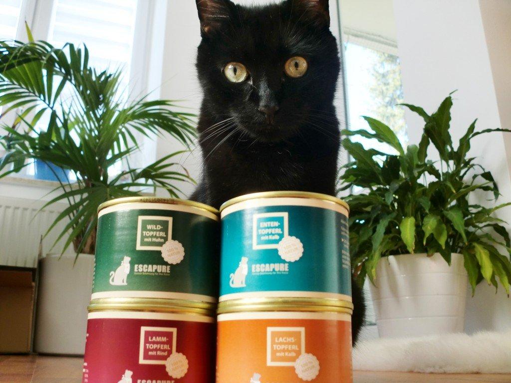 Testesser Filou mit Escapure Katzenfutter