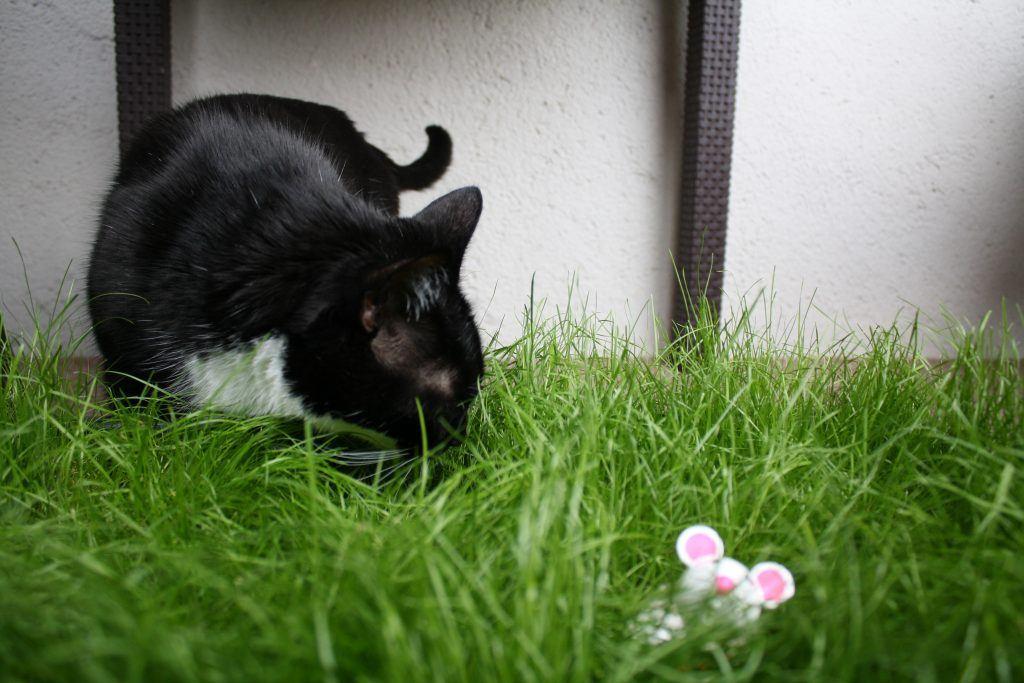 Snacky Mouse Klara versteckt sich gerne im Gras.