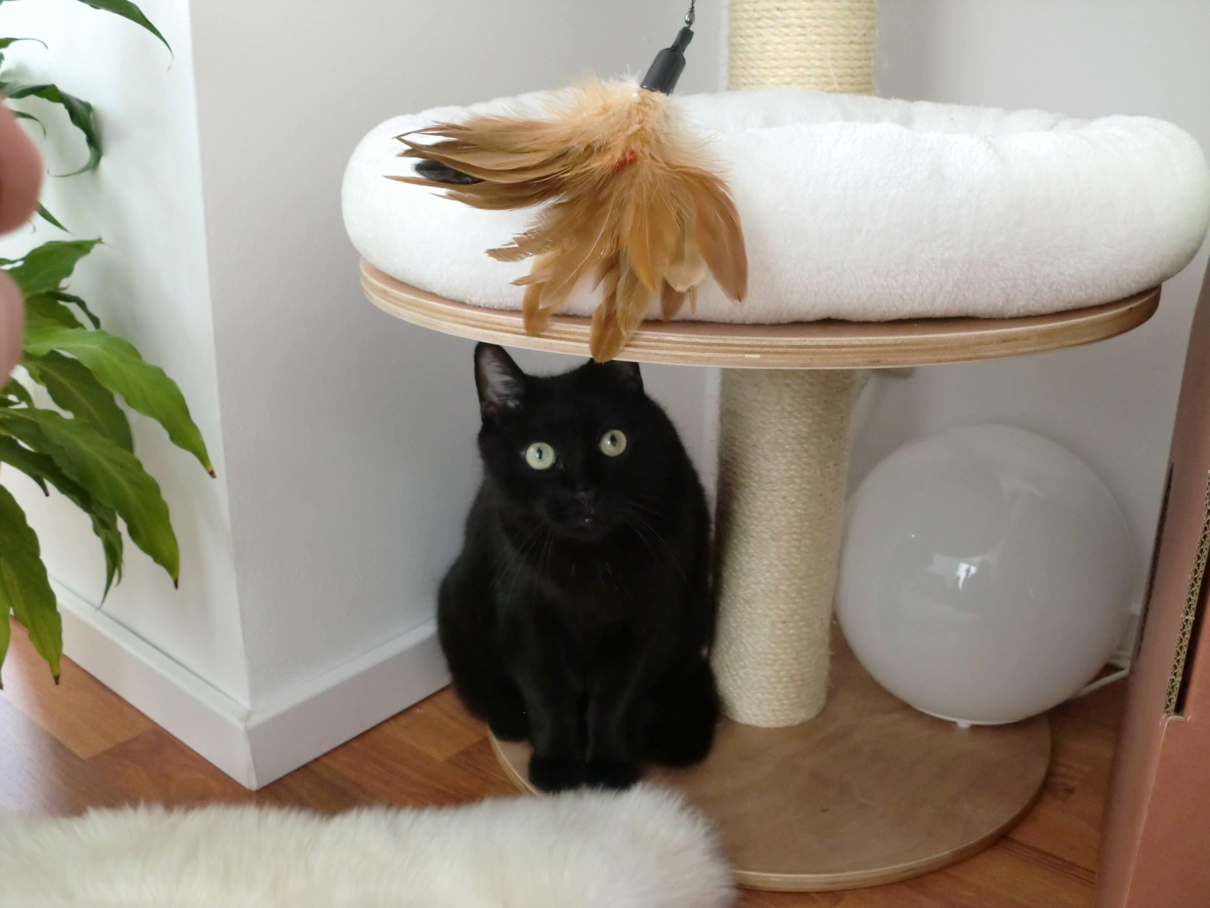 katze in der wohnung halten mindestgr e und anforderungen. Black Bedroom Furniture Sets. Home Design Ideas