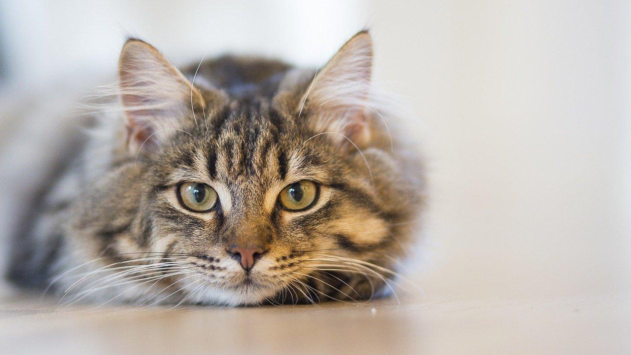 Katze In Der Wohnung Halten Mindestgröße Und Anforderungen