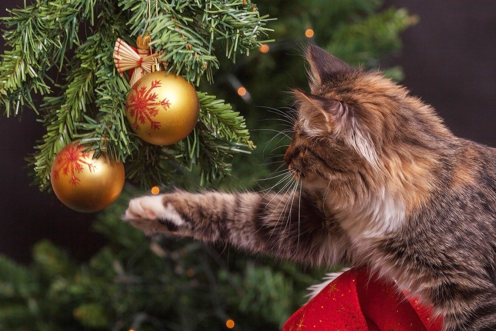 Katze Und Weihnachtsbaum Ist Ein Weihnachtsbaum Katzensicher