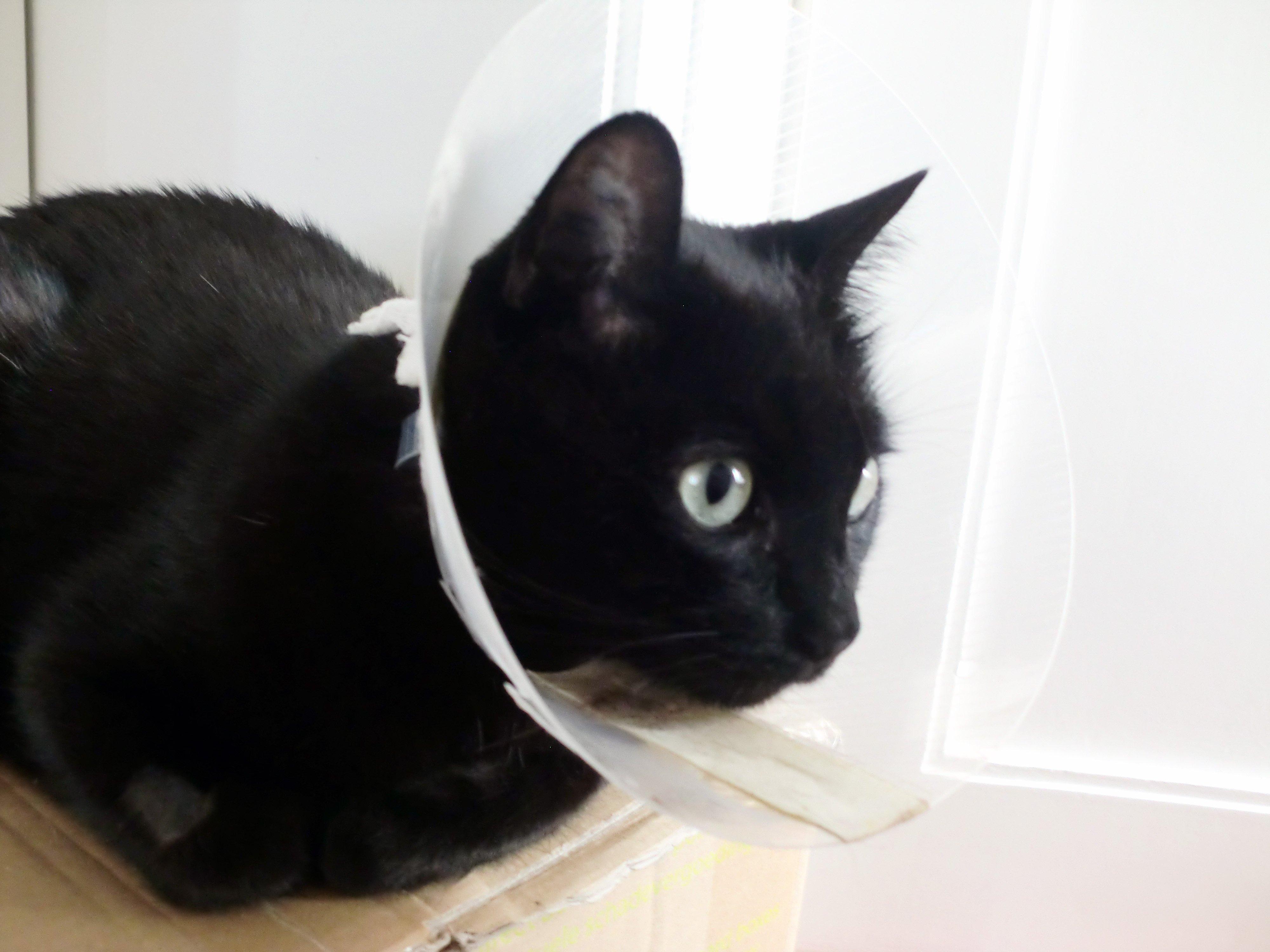 Katze Halskragen Wunde