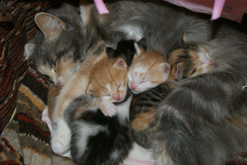 Katze Kastration