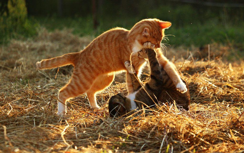 Katzen sind keine Einzelgänger