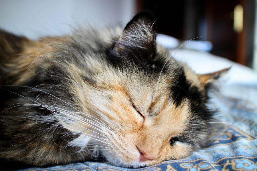 Katze Zeitaufwand