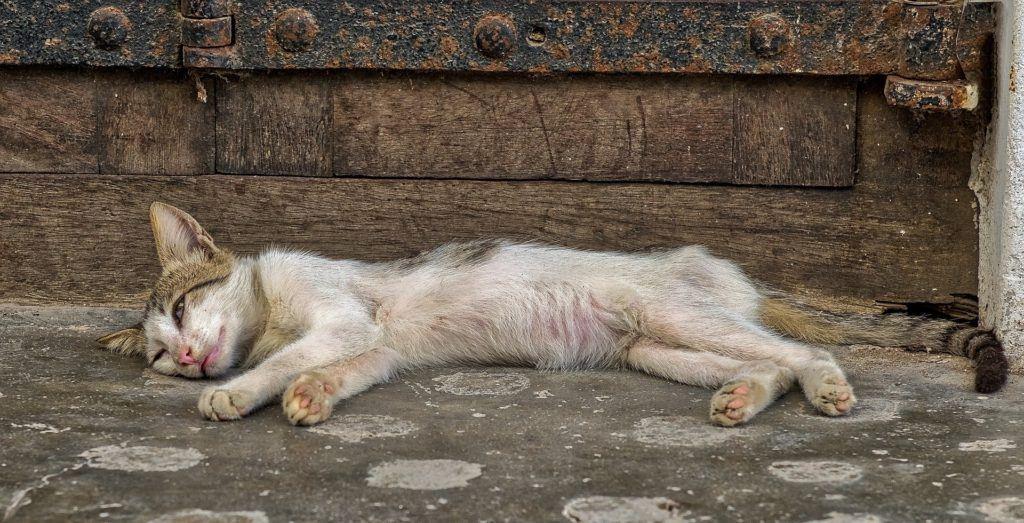 Kastration verhindert Tierleid