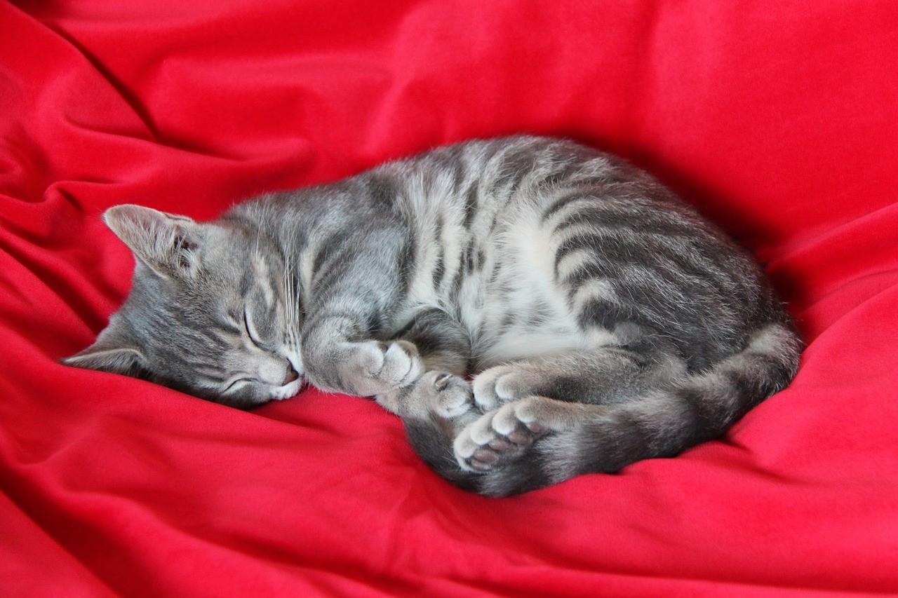 Katzen schlafen viel