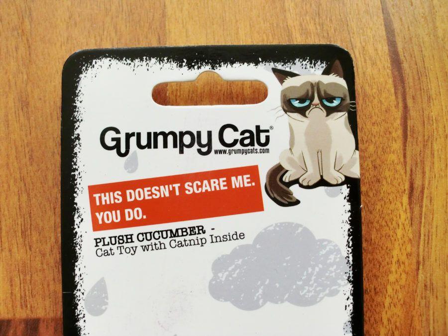 Erfahrungsbericht Katzenspielzeug