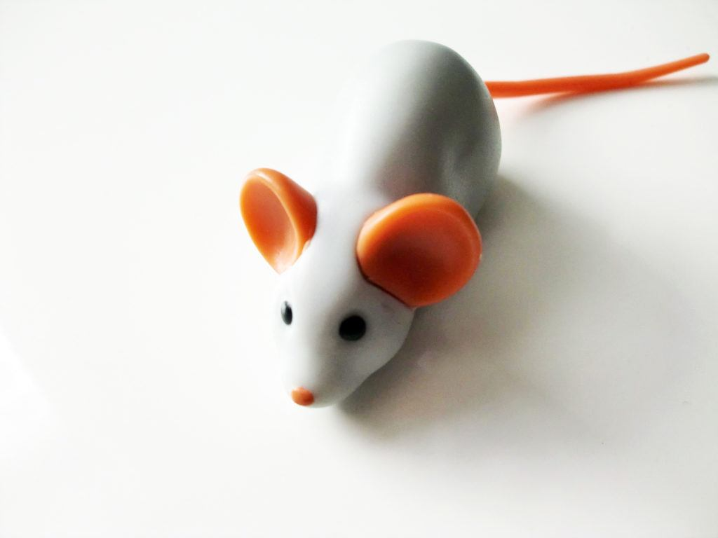 Katzenspielzeug im Test - Cheesy Mouse Hunt