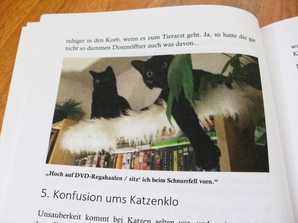 Katzenbuch mit Katzenfotos