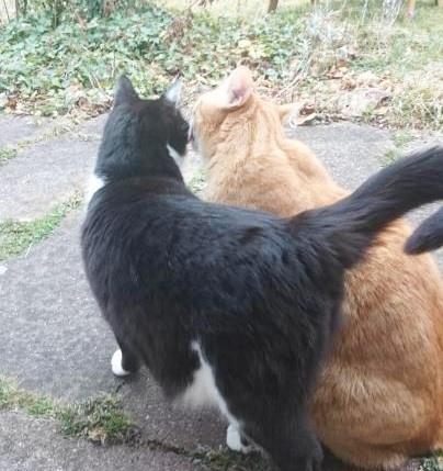 Kater-Freundschaft