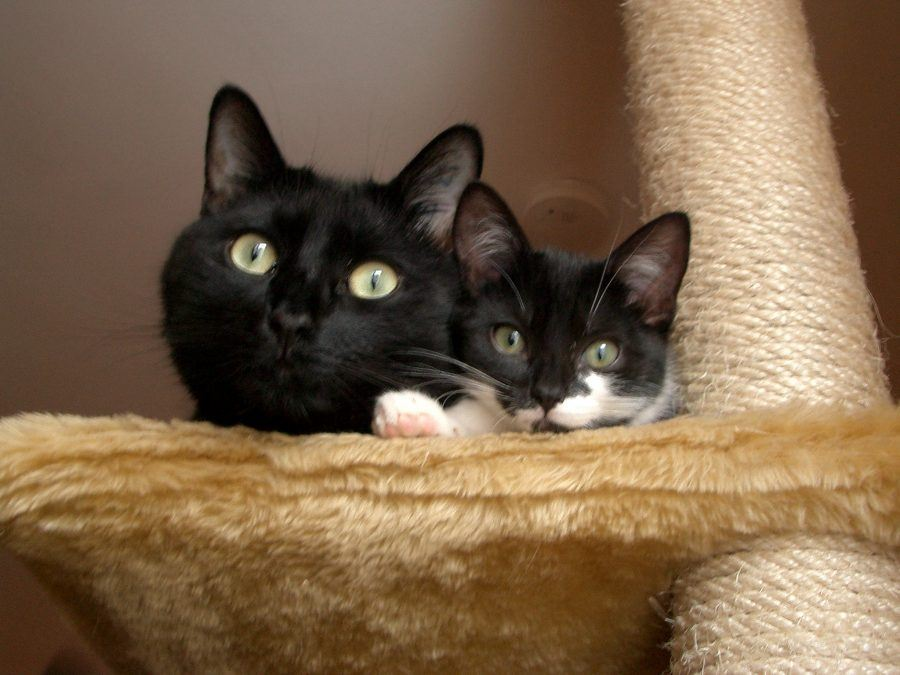Wichtige Tipps in der Katzenhaltung