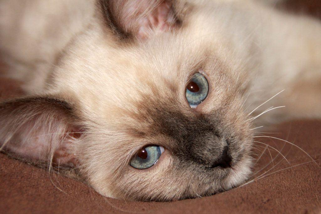 Stress bei Katzen lindern