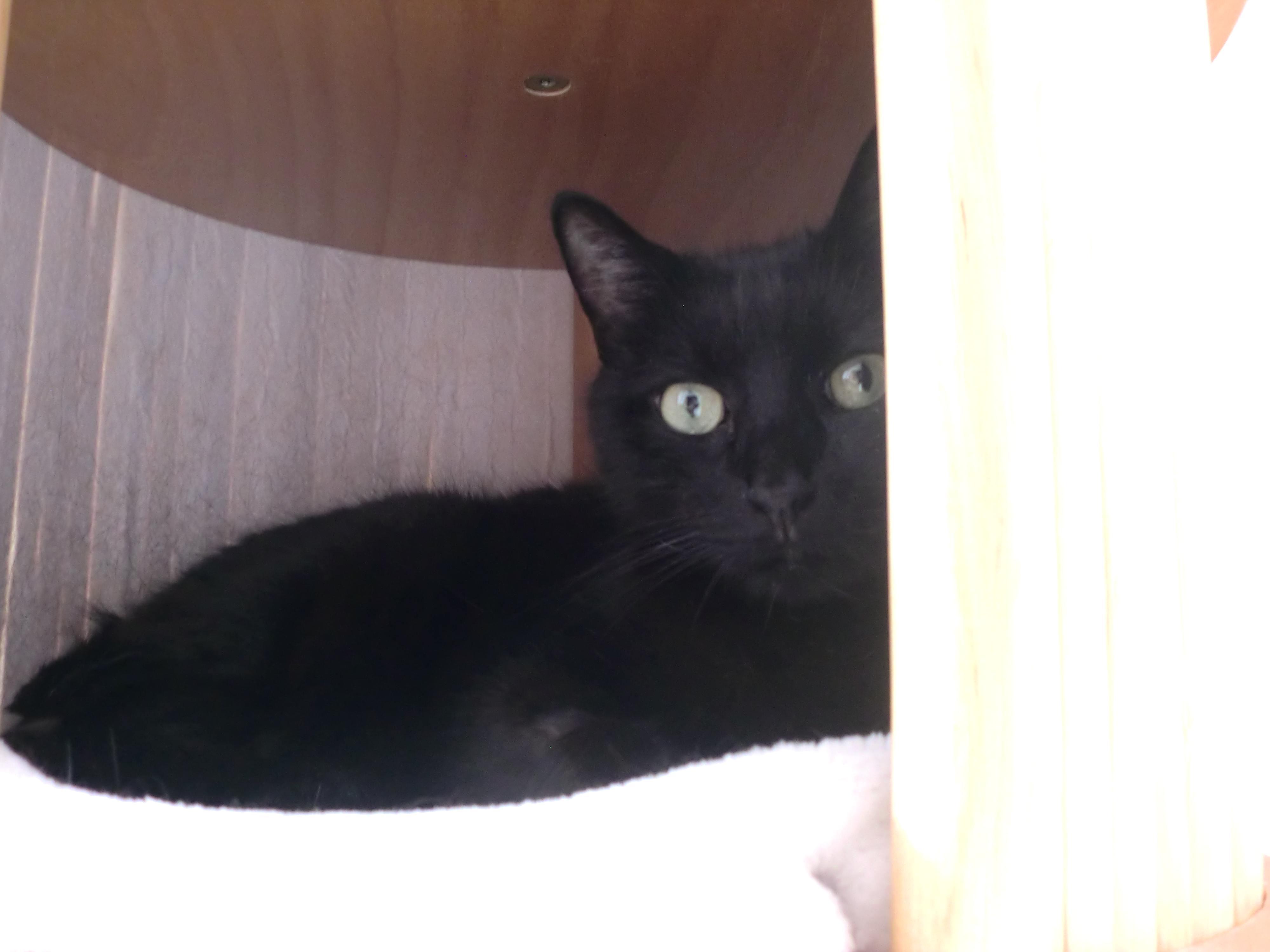 senior katzen was gibt es bei alten katzen zu beachten. Black Bedroom Furniture Sets. Home Design Ideas