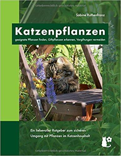 geignete Pflanzen für Katzen und giftige erkennen